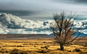 Картинка небо, облака, горы, степь, дерево, новая зеландия, new zealand