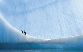 Обои пингвины, Антарктика, природа
