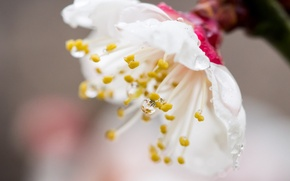Обои лепестки, капля, сад, роса, весна, цветок
