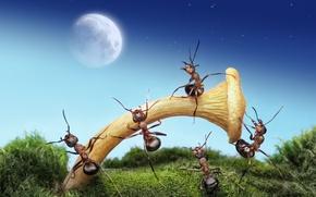 Обои макро, муравьи, обои от lolita777, ситуация, луна, ночь, насекомые, гриб