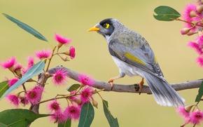 Обои цветы, перья, хвост, ветка, птица