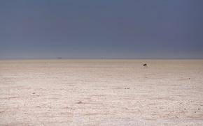 Картинка минимализм, пустыня, косуля