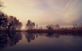Картинка деревья, туман, озеро, утро, кустарник