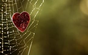 Картинка фон, сердце, паутина, зелёный