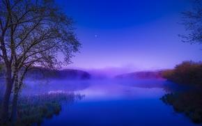 Картинка лес, лето, туман, река, рассвет, утро