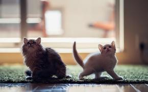 Обои Daisey, © Ben Torode, Hannah, котята
