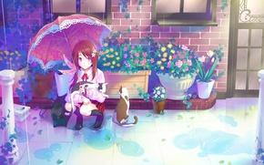 Картинка кошки, дом, дождь, окна, растения, зонт, дверь, лужи, рыжая, школьница, цветочки, сидит, горшки, кирпичный