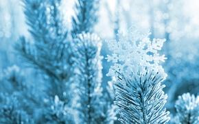 Картинка зима, макро, снег, иголки, ветки, природа, дерево, сосна, снежинка, боке