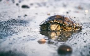 Картинка пляж, макро, черепаха, GJ-Vernon