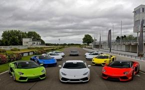 Картинка трасса, Lamborghini, белая, красная, зеленая, синяя, roadster, Aventador, Huracan, Goodwood Motor Circuit