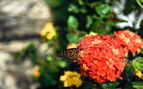 Картинка цветок, оранжевый, зеленый, green, бабочка, сад, flower, butterfly, garden, orange