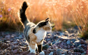 Картинка кошка, кот, галька, пятнистая