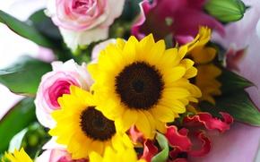 Обои букет, цветы, подсолнухи, желтые, розы