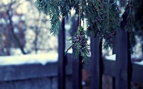 Картинка зима, макро, природа, дерево, ветка, туя, шишечки