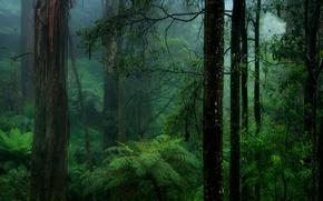 Картинка лес, природа, папоротник, мгла