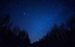 Картинка космос, звезды, деревья, ночь, пространство, силуэт, млечный путь