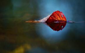 Картинка nature, water, autumn, leaf
