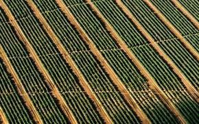 Картинка field, stripes, pattern, man, crop, rows