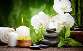 Картинка цветок, камни, свечи, бамбук, black, орхидея, flowers, черные, спа, orchid, stones, bamboo, candles, spa, массажные, …