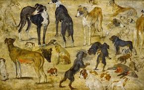 Обои животные, картина, Ян Брейгель старший, Эскизы Собак