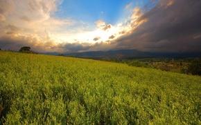 Обои солнце, небо, обоя, поле