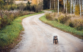 Обои дорога, друг, собака