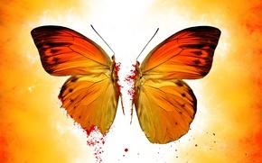 Обои кровь, желтый, бабочка
