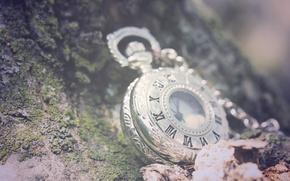 Картинка зелень, листья, макро, камни, фон, часы, цепочка, римские цифры