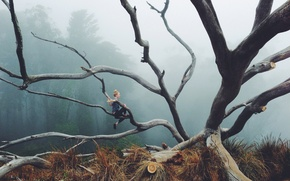 Обои girl, branches, fog, forest