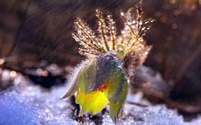 Обои капли, свет, снег, дождь, боке, прострел, сон трава