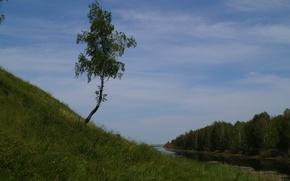 Картинка лес, речка, одинокая береза
