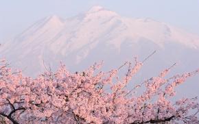 Картинка горы, розовое, цветущая сакура