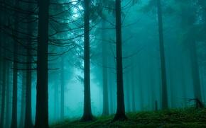 Картинка лес, природа, дымка