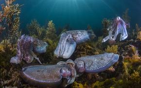 Картинка wildlife, squid, Seabed