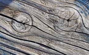 Обои дерево, текстура, фон