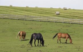 Картинка horses, farm, hay, wood fence