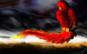 Картинка небо, тучи, природа, ветер, птица, ветка, попугай, хвост