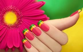 Картинка цветок, розовая, цветной, маникюр, гербера
