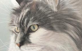 Картинка кот, взгляд, живопись, котяра