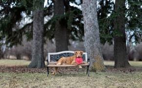Картинка парк, собака, скамья