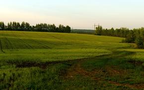 Картинка поле, лето, природа
