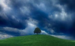 Обои зелень, небо, дерево, холм