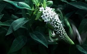 Обои цветы, жук, листья