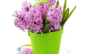 Картинка цветы, фон, ваза сумочка, фиолетовые Гиацинты