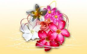Картинка линии, цветы, коллаж, букет, лепестки