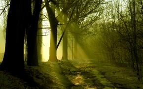 Картинка лес, снег, деревья, весна, солнечные лучи, март, ранняя, таяние