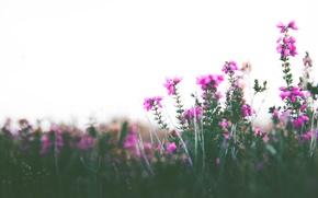 Обои боке, небо, стебли, цветы