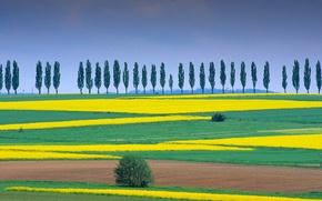 Картинка деревья, природа, поля, Германия, Нижняя Саксония, Айхсфельд, Дудерштадт