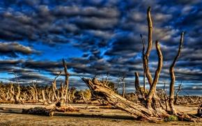 Картинка небо, облака, тучи, дерево, коряга