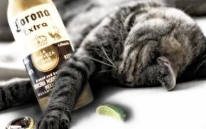 Обои бутылка, спит, кот